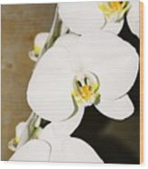 3 White Orchids Wood Print