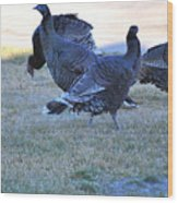 Wild Turkeys. Wood Print