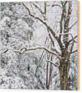 Winter In Monongahela National Forest Wood Print