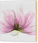 X-ray Of Peony Flower Wood Print