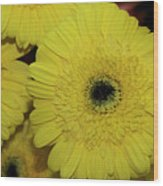 Yellow Gerbers Wood Print