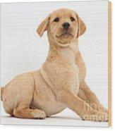 Yellow Labrador Retriever Puppy Wood Print