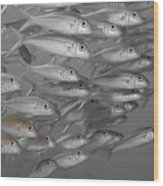 Yellowfin Goatfish Wood Print