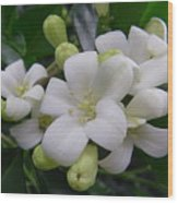 Australia - Gardenia White Flowers Wood Print