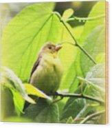 3154 - Tanager Wood Print