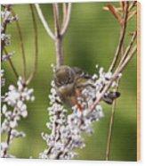 3172 - Warbler Wood Print