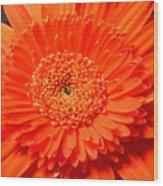 3286 Wood Print