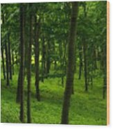 Nurture Nature Wood Print