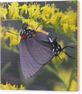 3398 - Butterfly Wood Print