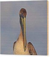 35- Brown Pelican Wood Print