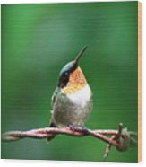 3531 - Ruby-throated Hummingbird Wood Print