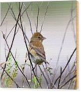 3571 - Tanager Wood Print