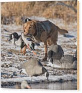 Duck And Goose Hunting Stock Photo Image Wood Print