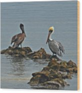 37-  Pelicans Wood Print