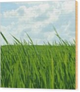 38744 Nature Grass Wood Print