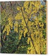 Fall Trees Wood Print