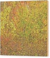 3991 Autumn Profusion Wood Print