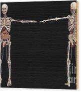 3d Rendering Of Human Skeleton Wood Print