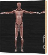 3d Rendering Of Male Muscular System Wood Print