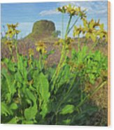 3da5792-dc Arrowleaf Balsamroot Framing Hat Rock Wood Print