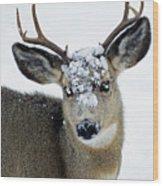 3x3 Mule Deer Buck-signed-#8800 Wood Print