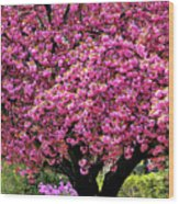 4-27-2009img_7246a Wood Print