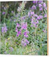 Alpine Wildflower Wood Print