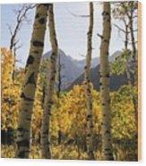 4 Aspens Wood Print