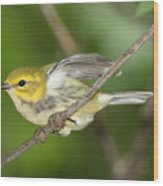 Black-throated Green Warbler Wood Print