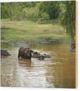 Buffalos Wood Print