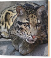 Clouded Leopard Wood Print