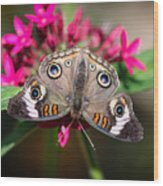Common Buckeye Junonia Coenia Wood Print