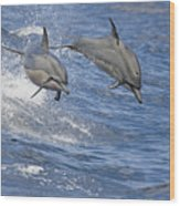 Dolphins Leaping Wood Print
