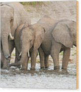 Elephants At The Bank Of Chobe River In Botswana Wood Print