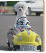 Fifi Goes For A Ride Wood Print by Michael Ledray