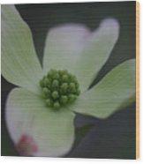 Flowering Dogwood Wood Print