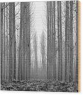 Foggy Morning Wood Print
