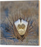 Greater Sage-grouse Wood Print