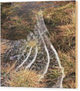 4. Ice Prismatics In Grass 1, Loch Tulla,  Wood Print