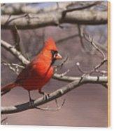 Img_0001 - Northern Cardinal Wood Print