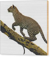 Leopard Panthera Pardus Climbing Wood Print