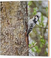 Lesser Spotted Woodpecker Wood Print
