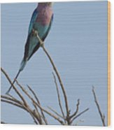Lilac Breasted Roller On The Hunt Wood Print