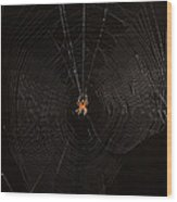 Marbled Orb Weaver Spider Wood Print