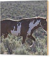 Mustang Stallion Wood Print