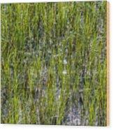 Nature Scenes Around Hunting Island South Carolina Wood Print