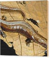 Nauta Palm Foot Salamander Wood Print