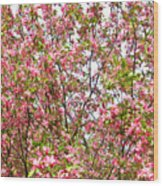 Pink Cherry Tree Wood Print