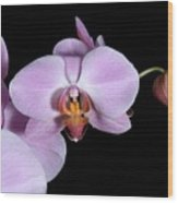 Pink Orchid IIi Wood Print