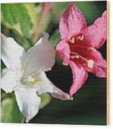 Pink Splash Variegated Weigela Wood Print